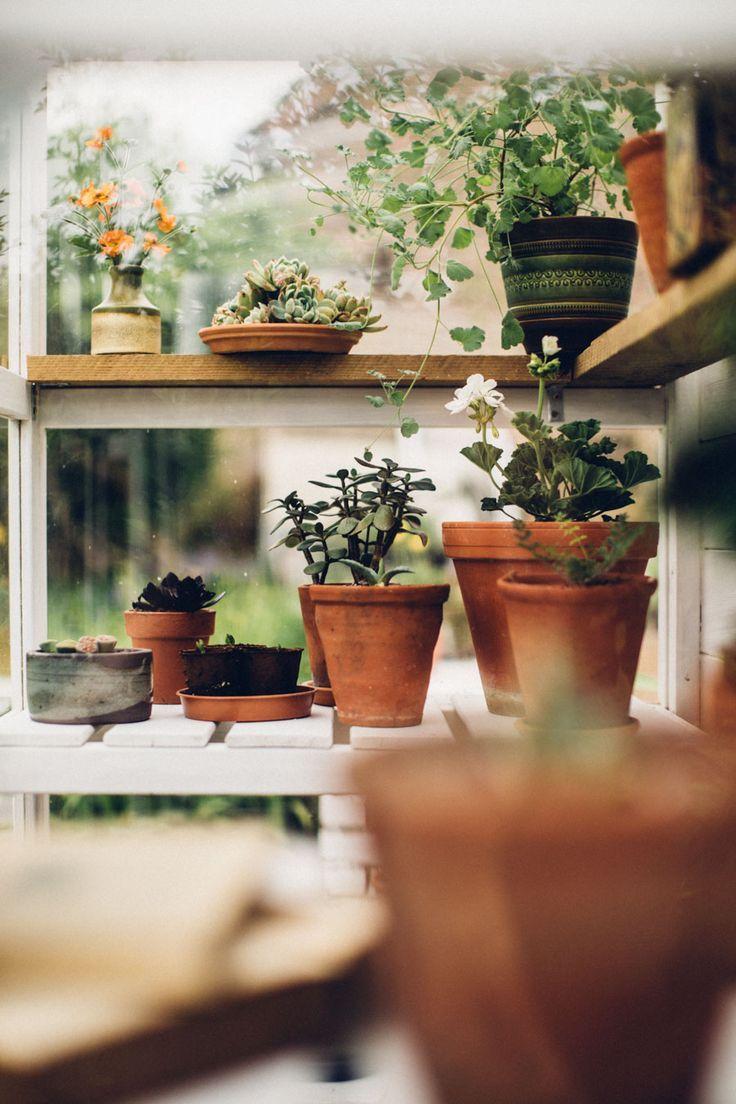 5 Tips Berkebun Di Balkon Apartemen
