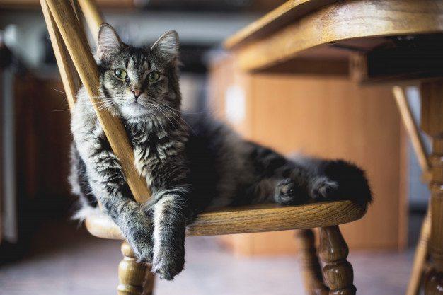 Manfaat Memelihara Kucing Di Apartemen
