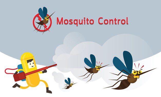 5 Cara Ampuh Membasmi Nyamuk Saat Musim Hujan