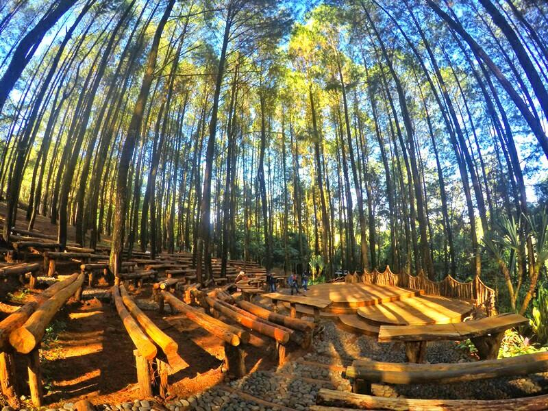 Pinus Mangunan