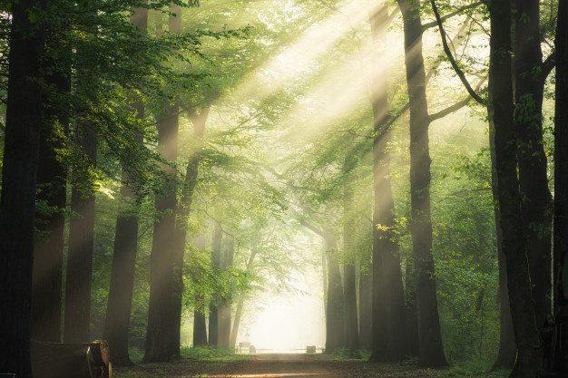 Hutan Wisata Yang Terkenal Di Indonesia