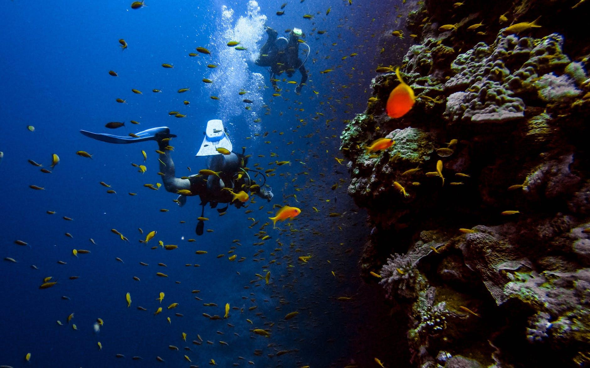 Sebelum Menyelam, Kenali Terlebih Dahulu 6 Jenis Scuba Diving