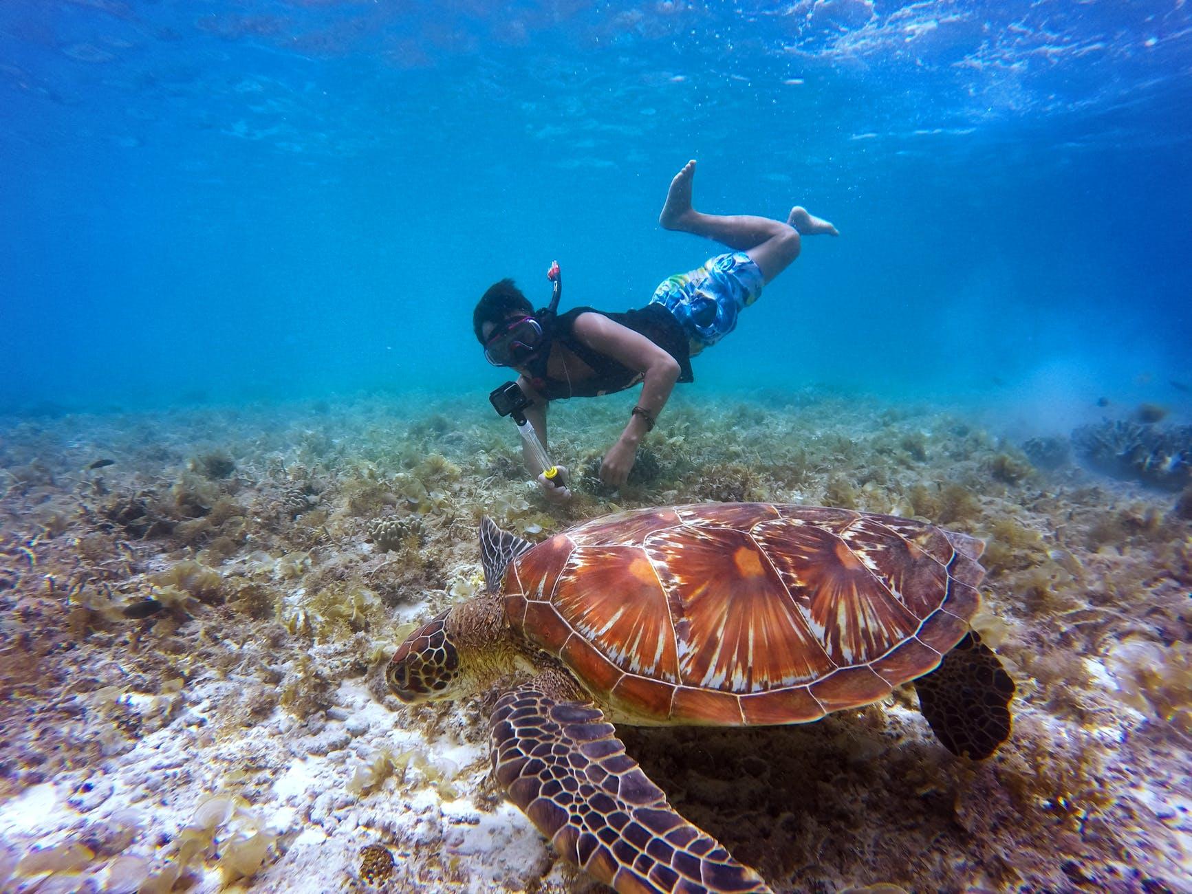 olahraga diving