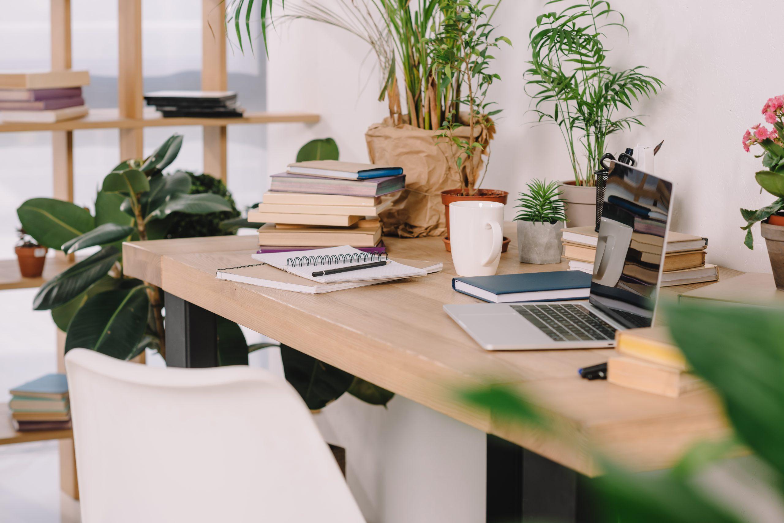 Manfaat Meletakkan Tanaman di Ruangan Kerja